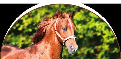 Four-Side-Ranch - Westernreiten für Jung und Alt